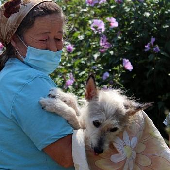 Besitzer mit kastriertem Hund