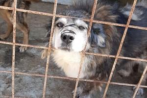 Projekt Staatliches Tierheim Odai