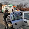 Kastrationen Tunari 12. + 13.02.2021 - 129 Tiere