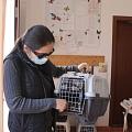Kastrationen Tunari 24.04.2021 - 40 Tiere
