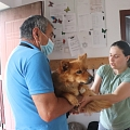 Kastrationen Tunari 12.06.2021 - 40 Tiere